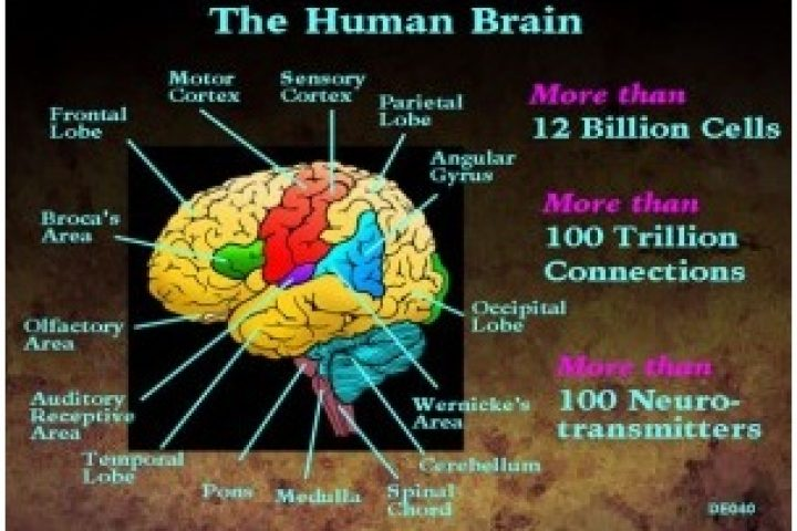 The human brain as a computer