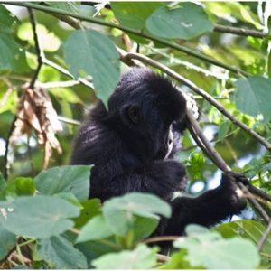 Keeping safe whilst gorilla trekking