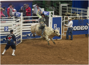 Bull Riding: A History of the Modern Sport
